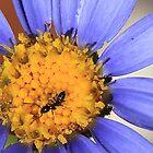 I love my honey, Pago del Humo, Spain 2012 by Timothy Adams