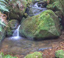 Coachwood Glen, Megalong Valley, NSW by Adrian Paul