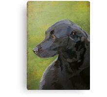 Black labrador Canvas Print