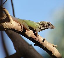 Jamaican Gecko by Bruce Moore