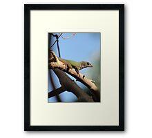 Jamaican Gecko Framed Print