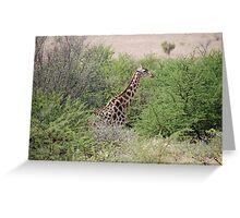 Giraffe in South Africa Greeting Card