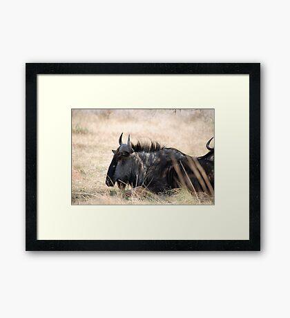 Pilanesburg Wildlife Framed Print