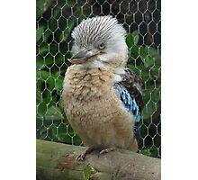 Got my bird face on Photographic Print