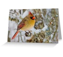 Female Cardinal perched on a branch Greeting Card