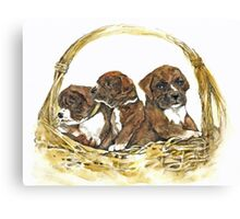 Boxer Basket Canvas Print