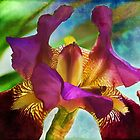 Watercolor Iris by Kathy Nairn