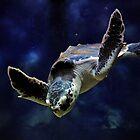 Sea Turtle by venny