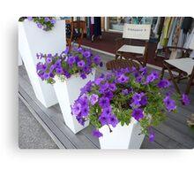 Cap Ferrat Petunias Canvas Print