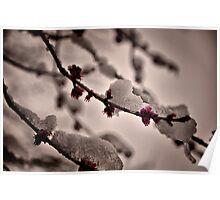 Snow Blossom Poster