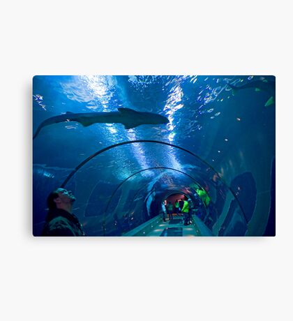 Creatures Of The Deep Canvas Print