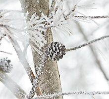 Snow covered pine code by derejeb