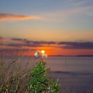 yellow sunset tall thistles by morrbyte
