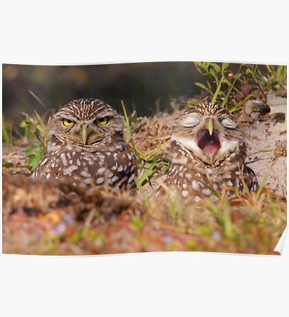 We Hate Mornings - Burrowing Owls Poster