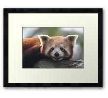 Say Bamboo Framed Print