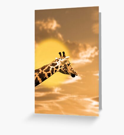 zebra portrait in the sunset Greeting Card