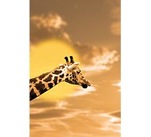 zebra portrait in the sunset Photographic Print