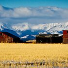 Rocky Mountain Front Barn by Miles Glynn