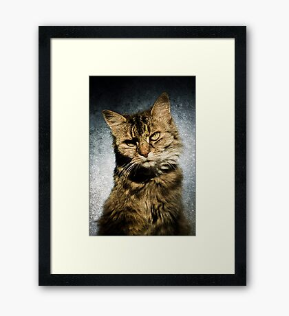 Cat asks Question Framed Print