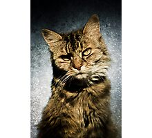Cat asks Question Photographic Print