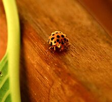 Ladybugs 3 by Alison Hill