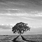 Tree Tracks by Geoff Carpenter