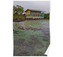 Panama. Bocas del Toro. Coral reef. Poster