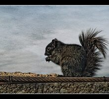 Squirrely by greyrose