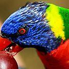polly want a grape!!!!!!!! by Carol  Lewsley