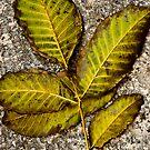 a leaf II by Clockworkmary