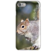 Grey Squirrel iPhone Case/Skin