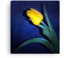 Yellow Tulip on Blue Canvas Print