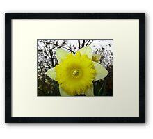 Signs Of Spring 2012 4 Framed Print