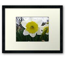 Signs Of Spring 2012 6 Framed Print