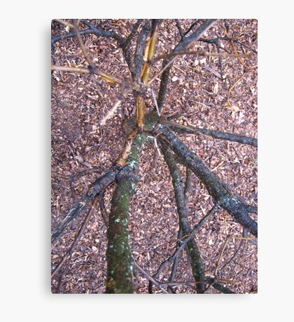 Have You Ever Looked Down A Tree Trunk Canvas Print