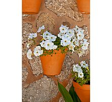 Wall with flowers Photographic Print