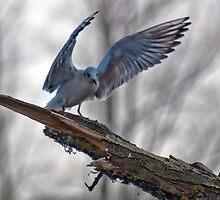 Wings by Bradley Old