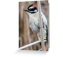 Seeking Bug-cicles -- Downy Woodpecker Greeting Card