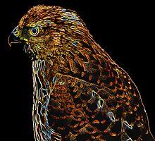 Etched Hawk by mrthink