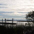 Dusk on the Marsh by designingjudy