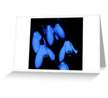 Snow drops felling the blues Greeting Card
