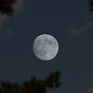 Piney Woods Moon by Betty Northcutt