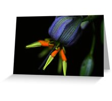 Dianella caerulea  Greeting Card