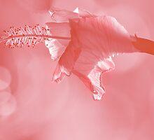 flower in tritone by Loreto Bautista Jr.