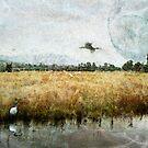 White Ibis Dreaming by Margi