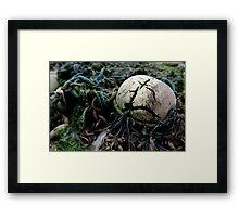 untitled #24 Framed Print