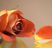 Still Life Rose and Petal by Linda  Makiej