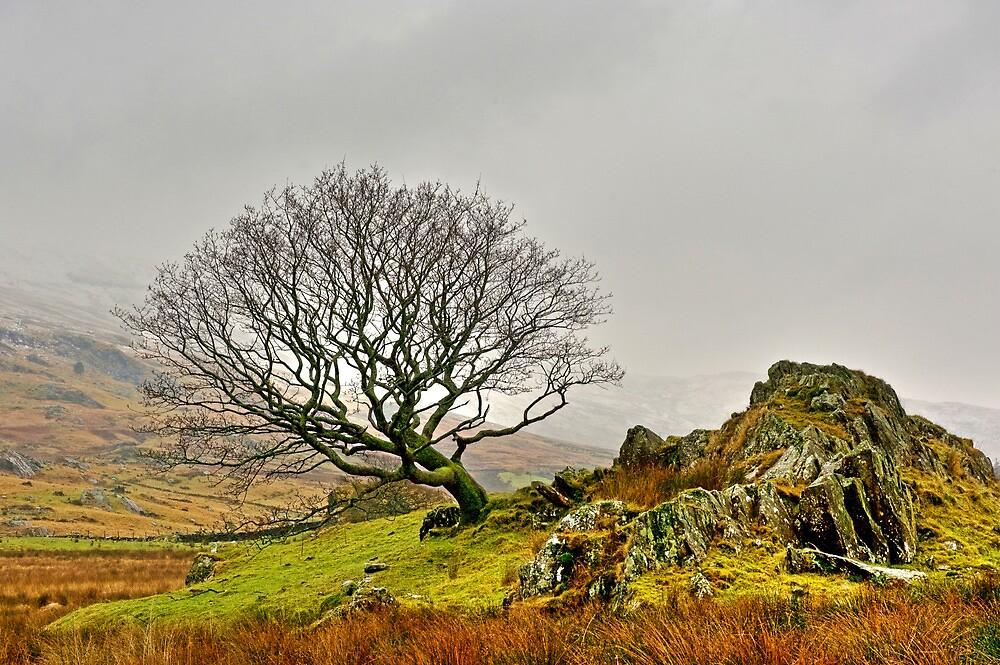 Mountain Tree by JPassmore