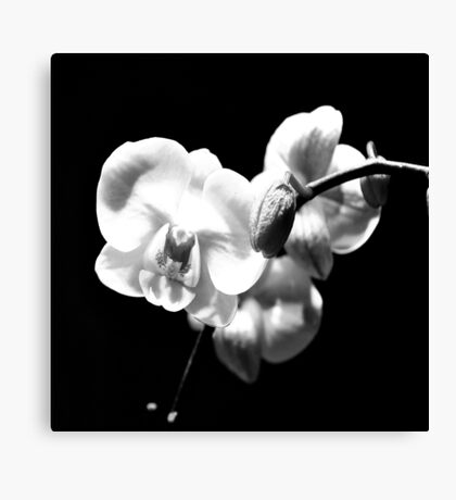 Heart Cluster of Orchids in B&W Canvas Print