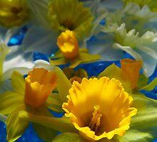 Daffodils In Blue by WildestArt